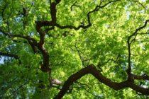 Eine App für die Bäume