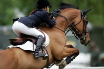 Pferdehalter werden vielleicht bald schon zu Kasse gebeten